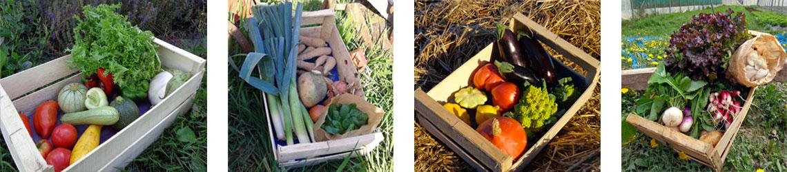 paniers-legumes-bio